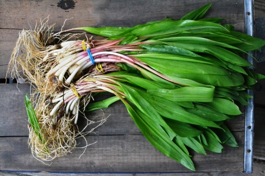 Obligatory beauty shot of  ramps.